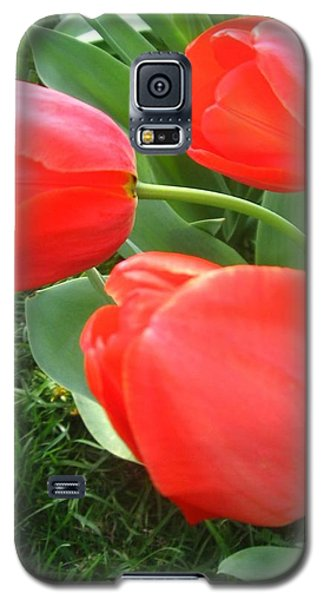 Red Spring Tulips Galaxy S5 Case