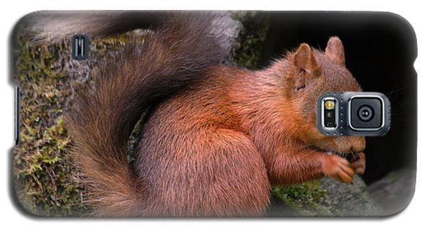 Galaxy S5 Case featuring the photograph Red Squirrel by Lynn Bolt