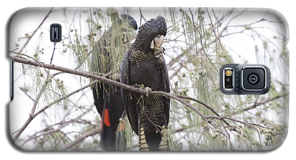 Red Tailed Black Cockatoos Galaxy S5 Case by Douglas Barnard