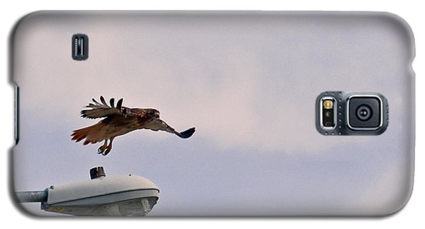 Red-tailed Hawk In Flight Galaxy S5 Case
