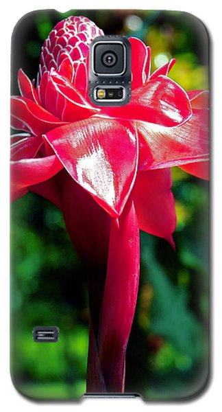 Red Torch Ginger Galaxy S5 Case