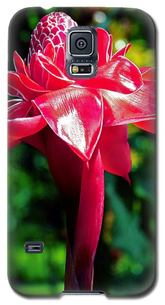 Red Torch Ginger Galaxy S5 Case by Jocelyn Kahawai