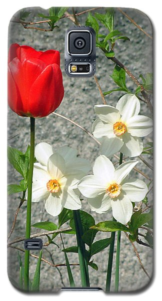 Galaxy S5 Case featuring the photograph Red Tulip by Richard James Digance