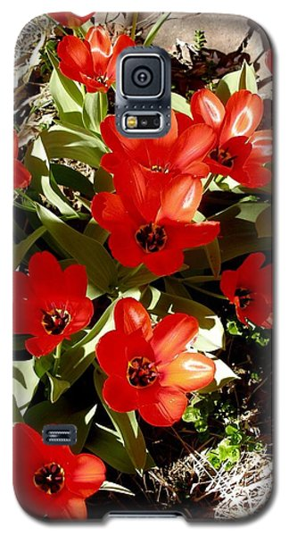 Galaxy S5 Case featuring the photograph Red Tulips by David Pantuso