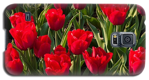 Red Tulips Galaxy S5 Case by Hans Engbers