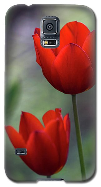 Galaxy S5 Case featuring the photograph Red Tulips by Raffaella Lunelli