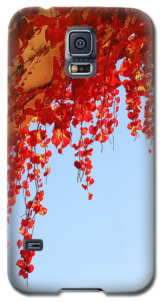 Red Vine Galaxy S5 Case