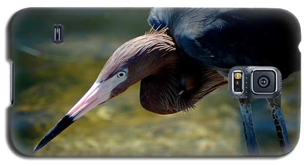 Reddish Egret 2 Galaxy S5 Case