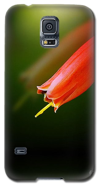 Reflection Galaxy S5 Case by Judi Bagwell