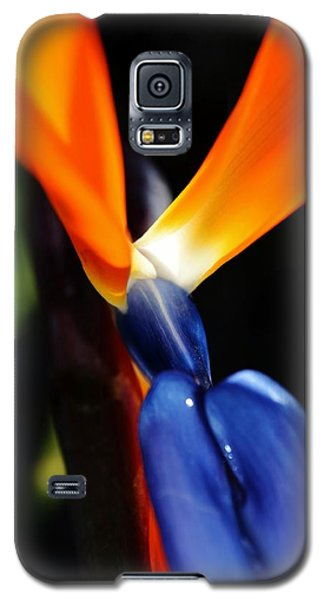 Galaxy S5 Case featuring the photograph Reginae Strelitzia by Werner Lehmann