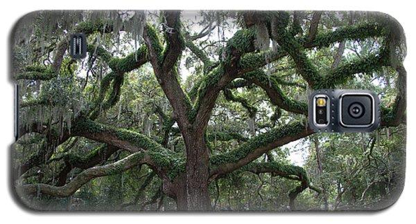Resurrection Oak Galaxy S5 Case by Dodie Ulery