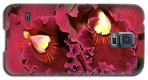 Rich Burgundy Orchids Galaxy S5 Case by Phyllis Denton