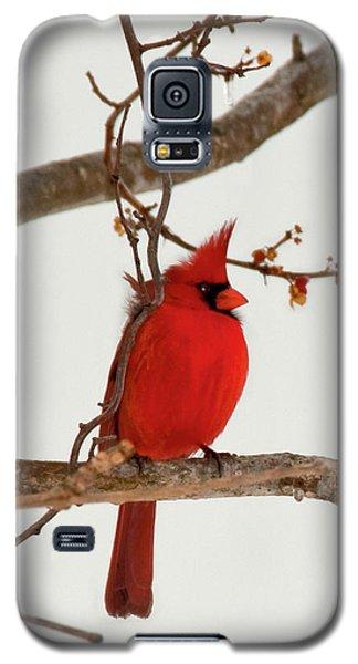 Righteous Cardinal Galaxy S5 Case