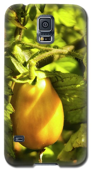 Galaxy S5 Case featuring the photograph Ripening Roma by Albert Seger