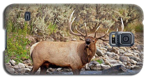 River Bull Galaxy S5 Case
