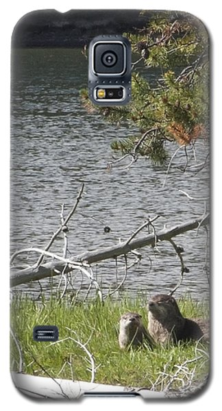 River Otter Galaxy S5 Case by Belinda Greb