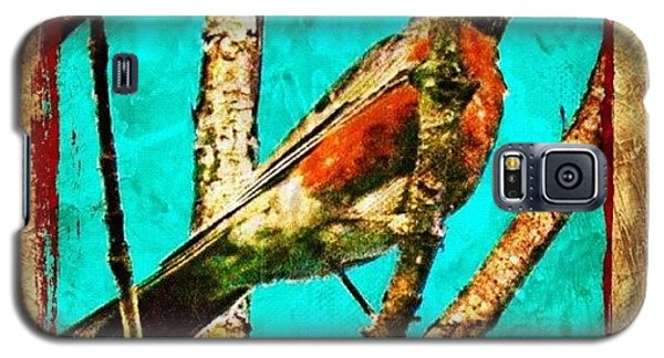 Edit Galaxy S5 Case - Robin Perch  by Mari Posa