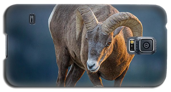 Rocky Mountain Big Horn Ram Galaxy S5 Case