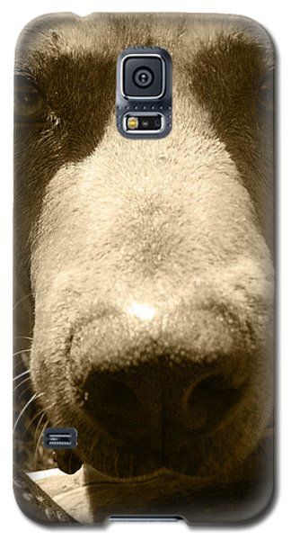 Galaxy S5 Case featuring the photograph Roscoe Pitbull Eyes by Kym Backland