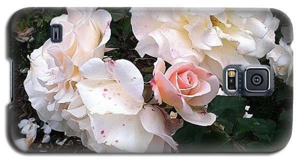 School Galaxy S5 Case - Rose Garden @ Huntington Library by Agustin  Hsu