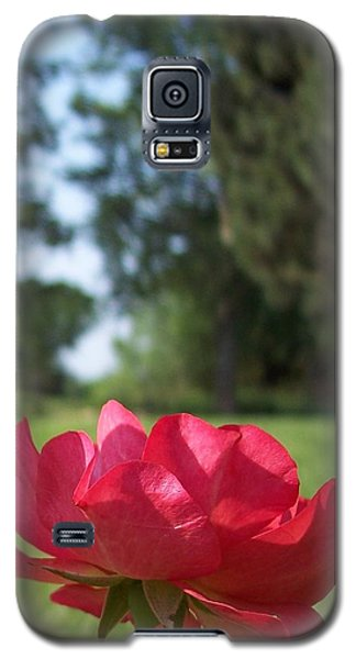 Rose Red Galaxy S5 Case by Rebecca Overton