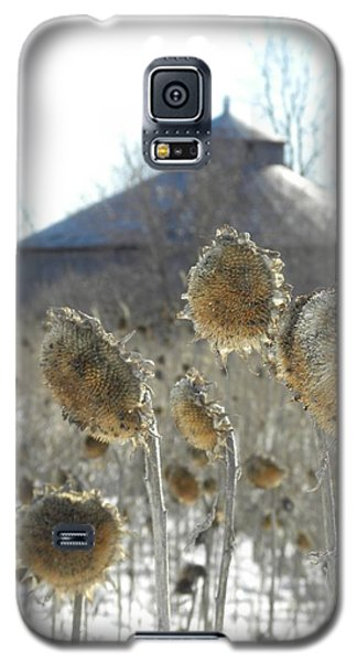 Round Barn With Sunflowers Galaxy S5 Case
