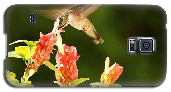 Galaxy S5 Case featuring the photograph Ruby Throat Hummingbird by Luana K Perez