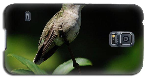 Ruby-throated Hummingbird Female Galaxy S5 Case