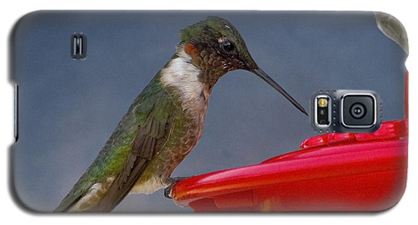 Ruby-throated Hummingbird Galaxy S5 Case