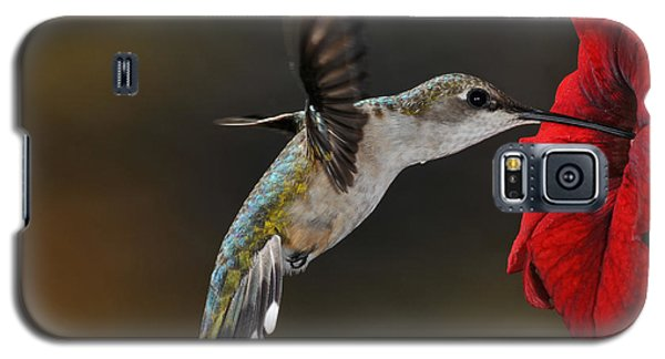 Ruby Throated Hummingbird Galaxy S5 Case by Mike Martin