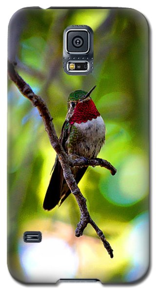 Galaxy S5 Case featuring the photograph Ruby Throated Hummingbird by Susanne Still