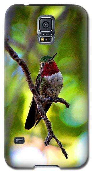 Ruby Throated Hummingbird Galaxy S5 Case by Susanne Still