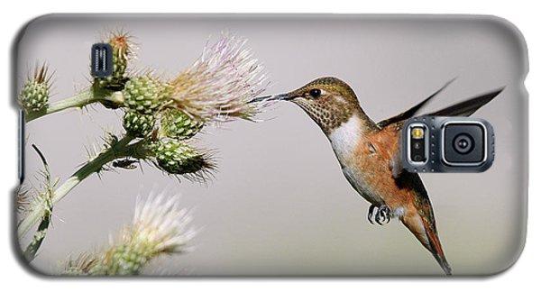 Rufous Hummingbird Galaxy S5 Case by Doug Herr
