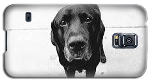 Galaxy S5 Case featuring the photograph Sad Lab by Lennie Green