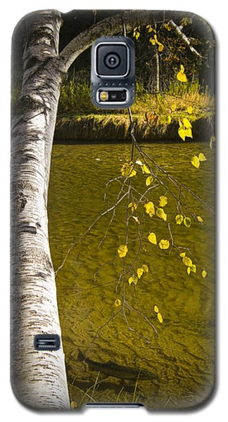 Salmon During The Fall Migration In The Little Manistee River In Michigan No. 0887 Galaxy S5 Case