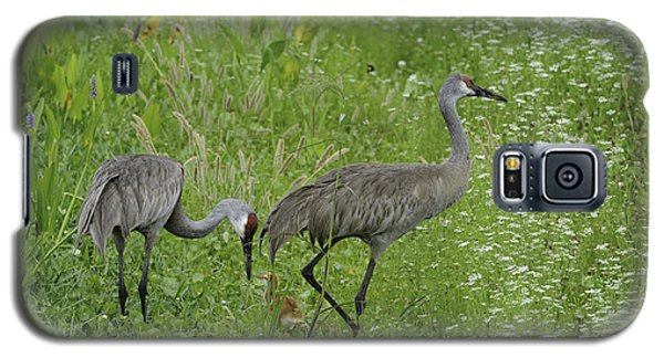 Galaxy S5 Case featuring the photograph Sandhill Cranes And Chick by Bradford Martin