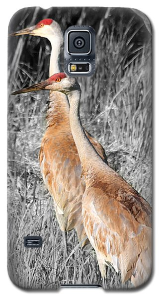 Sandhill Cranes In Select Color Galaxy S5 Case