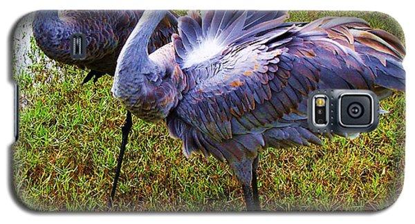 Sandhill Cranes-plumes In Bloom Galaxy S5 Case