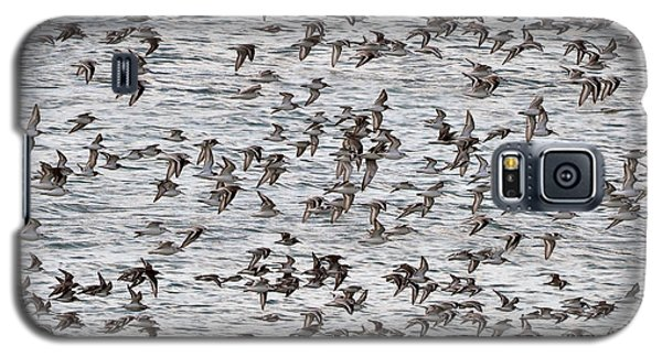Galaxy S5 Case featuring the photograph Sandpipers In Flight by Dan Friend
