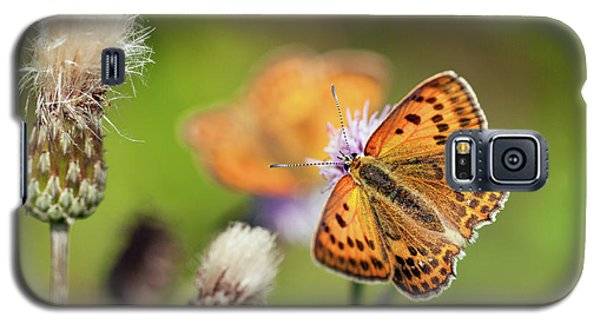 Scarce Copper Butterfly Galaxy S5 Case