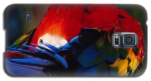 Scarlet Macaw Galaxy S5 Case