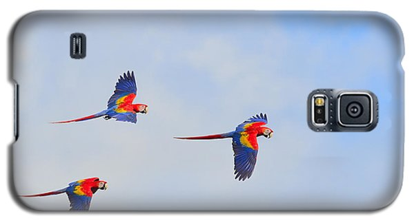 Scarlet Macaws Galaxy S5 Case by Tony Beck