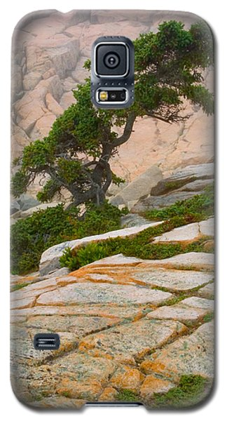 Schoodic Cliffs Galaxy S5 Case by Brent L Ander