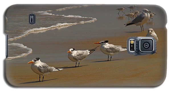 Sand And Sea Birds Galaxy S5 Case by Barbara Middleton