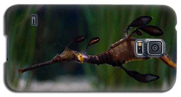 Sea Dragons Galaxy S5 Case by Carol Ailles