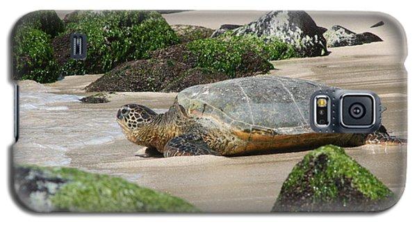 Sea Turtle 1 Galaxy S5 Case