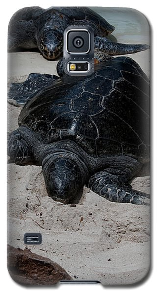 Galaxy S5 Case featuring the photograph Sea Turtles by Karen Harrison