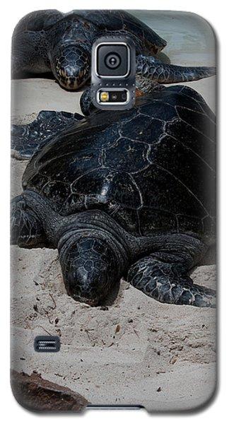 Sea Turtles Galaxy S5 Case
