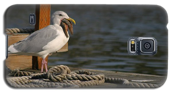 Galaxy S5 Case featuring the photograph Seagull Swallows Starfish by Kym Backland