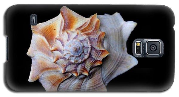 Galaxy S5 Case featuring the photograph Seashell 1 by Deniece Platt